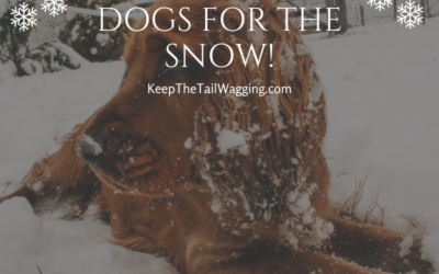 Preparing Our Dogs for Snow!