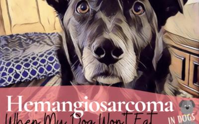 Hemangiosarcoma: When My Dog Won't Eat Her Food